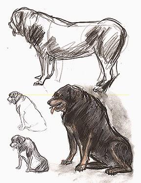 03d32-animals